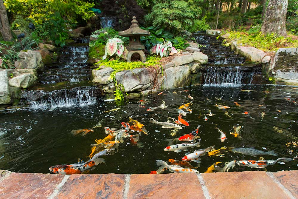 Tips on koi ponds from a professional landscaper for Koi pond depth